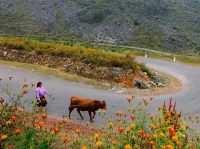 Flowers season in Ha Giang