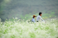 Ecstasy with the fields of napa cabbage flowers in Moc Chau