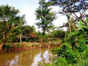 Experience in a hamlet in Mekong Delta