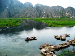 Come back Tam Coc on harvesting time