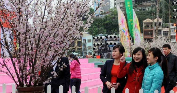 The 3rd Sakura Festival to be opened in Quang Ninh