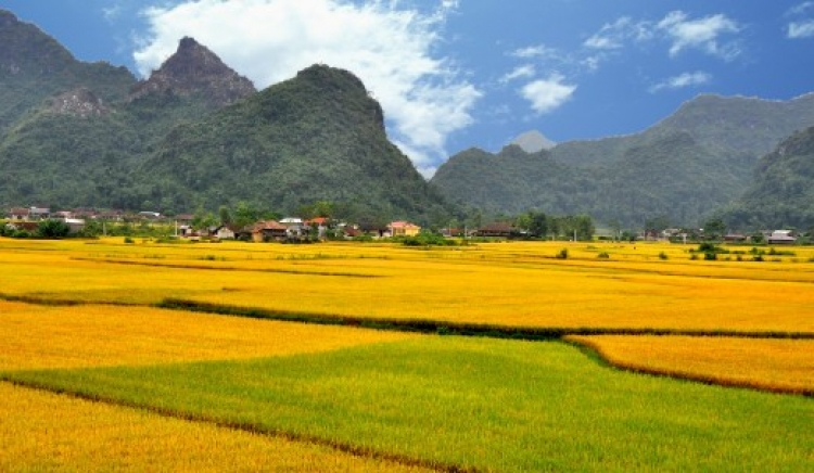 Bac Son valley - The breathtaking field in Northeast Vietnam